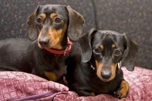 Millie & Ruby
