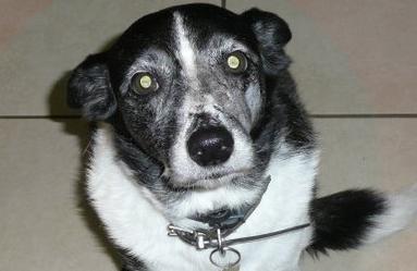 My lovely old dog, Tess