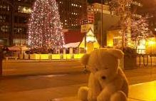 Sad lonely bear